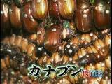 แปลกๆ, เทวรูปแมลง, เทวรูป, แมลง, สัตว์, สิ่งศักดิ์สิทธิ์, ญี่ปุ่น, มันแปลกดีนะ