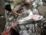 คลิป นาทีชีวิต   ทำคลอด   ฉลาม
