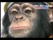 คลิป ขำกลิ้งลิงกับหมา ปัง เจมส์ pan james monkey dog
