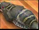 คลิป งูยักษ์ กินคนจริง !!!!!!!!