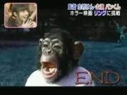 คลิป ขำกลิ้งลิงกับหมา - ปังแสดงเป็นผี