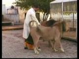คลิป สิงโต คน เลี้ยง เชื่อง รัก ดูแล กัด ดุ