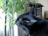อาหารเสริมที่สำคัญสำหรับแมว 555+