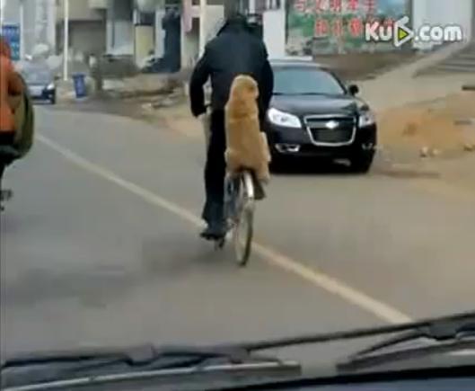 หมา สัตว์เลี้ยง น่ารัก