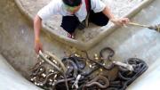 คลิป จับงูมือเปล่า จับงูโยน งูเห่า จับงู อสรพิษ ขนลุก ใจกล้า หนุ่มใจกล้า งู Cobra Man Handling