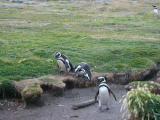 คลิป เพนกวินกระโดด เพนกวิน นกเพนกวิน แพนกวิน กระโดด funny penguin falling down