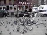 จับนก วิธี นก นกพิราบ กินอาหาร เหยื่อ Cool Way To Catch Pigeons