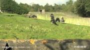 กอลิล่าเดินเหมือนคน กอลิล่าเดิน กอลิล่า ลิง Gorilla Walks Upright