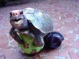 เต่าทะลึ่ง เต่า มีเซ็กส์ ผสมพันธุ์ sex อลังการงานสร้าง ใหญ่โต อวัยวะเพศ สุดบรรยา
