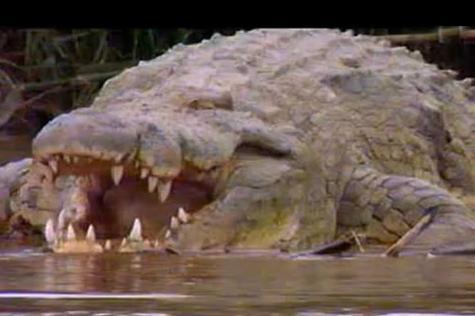 จระเข้ยักษ์ ฟิลิปปินส์ ใหญ่ น่ากลัว