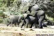 คลิป การผสมพันธ์ของช้าง ช้างป่า สวนสัตว์เปิด