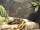 งู งูเหลือม อันตราย น่ากลัว สยอง ใหญ่ที่สุดในโลก บันทึก กินเนสส์บุ๊ค