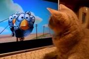 แมว ดูการ์ตูน แมวชอบการ์ตูน