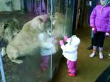 สิงห์โต เล่นกับเด็ก ๆ