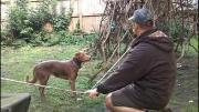 คลิป สุนัขทรงตัวบนเชือก หมาเก่ง หมาฉลาด สุนัขฉลาด สุนัขเก่ง สุนัขทรงตัวบนโซ่ Ozzy สุนัขเจ๋ง Amazing Acrob