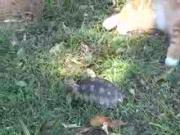 คลิป แมว เต่า นินจา