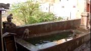 หนุกหนาน ลิงกระโดดน้ำ เล่นน้ำ ลิง ฝูงลิง ลิงร้อน บ่อน้ำ