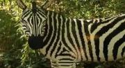 คลิป เมื่อสวนสัตว์ไม่มีสัตวป่า