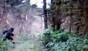 คลิป ฮือฮา! ถ่ายติดสัตว์ลึกลับ ไอ้ตีนโต 'บิ๊กฟุต' ในป่าโอไฮโอ