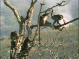 ฮาฮา ลิง ขำขำ สัตว์ป่า