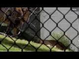 คลิป สิงโตในสวนสัตว์เทกซัส ขย้ำตัวเมียต่อหน้านักท่องเที่ยว