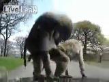 คลิป โชว์ลิงมีเซ็ก ในสวสัตว์เปิด