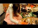 คลิป สวรรค์ ของคนรัก แมว มาส่องคาเฟ่แมวที่ ญี่ปุ่น กัน