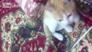 คลิป ไอ้นี่โรคจิตรเอาบุหรี่จี่ก้นแมว
