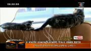 เรื่องเล่าเช้านี้ - คลิปแมวน้อยจอมซนเล่นหางแม่