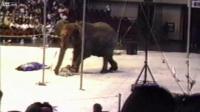 คริปเหตุการ สังหาร ช้าง ในคณะละครสัตว์ เมื่อปี 1994