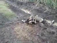 ปล้นรถขนอาวุธ ทหาร โคลัมเบีย