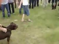 หมา หมากัด พิตบูล ทิเบตัน