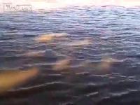 ตกปลา PIRANHA ง่ายแท้ใน Venezuela