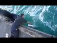 รวมเด็ด โหดเกิ๊น!! ตกปลา ไม่ง้อเบ็ดซะด้วยเทพจริง