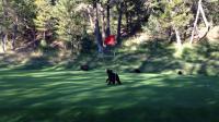 คลิป ลูกหมีมันก็ชอบเล่น กอล์ฟ นะ