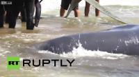 คลิป ชาวอิตาลีช่วยชีวิตปลาวาฬเกยตื้นที่ชายหาด