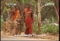 เสือ น่ารัก พระ