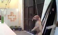 หมา แกล้งหมา ทารุณ แกล้งสัตว์ บาปกรรม