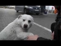 คลิป น้องหมาที่เป็นมิตรที่สุดในโลก คนแปลกหน้าก็ไม่กัดเล่นด้วยทุกคน