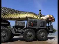 งู ใหญ่ มาก ยักษ์ แปลก