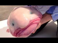10 อันดับปลาน้ำลึก สุดประหลาดที่คุณต้องอึ้ง