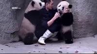 คลิป ความน่ารัก ของหมีแพนด้า ขณะป้อนนม