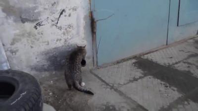 แมวฉลาด