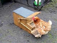 คลิป เครื่องให้อาหารไก่ ที่ไก่ต้องขึ้นไปเหยียบถึงจะได้กิน ถ้าไก่ไม่ฉลาดก็กินไม่ได้นะเนี่ย