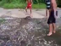 ปลาช่อน ยาว ใหญ่