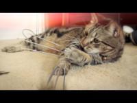 วูฟเวอร์ลีน เวอร์ชั่นแมว น่ารักไปอีกแบบ 5555