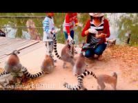 คลิป น่ารัก สัตว์น่ารัก สวนสัตว์ ดูสัตว์ เขาเขียว ลีเมอร์ ให้อาหารสัตว์ สนุกสนาน นั่งเรือ สุดยอด