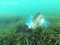 หุ่นยนต์ปลา 4 ครีบ ว่ายน้ำหยั่งกับผีเสื้อบิน