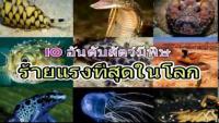 10 อันดับสัตว์มีพิษร้ายแรงที่สุดในโลก