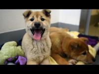 บุกช่วยสุนัขรอเชือดที่เกาหลีใต้ ดูหน้าตาพวกมันแต่ละตัวสิ